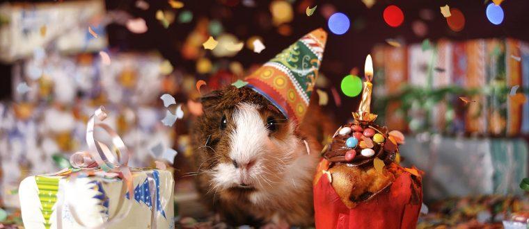 כך תחגגו יום הולדת בלתי נשכח